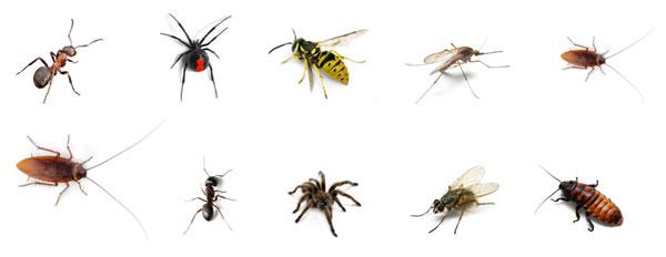 نصائح عامه لمكافحة الحشرات